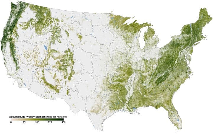 Forest Cover Density Across The United States